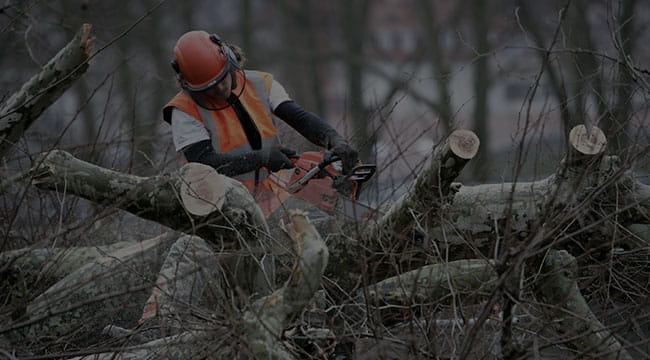 Little Elm Tree Service
