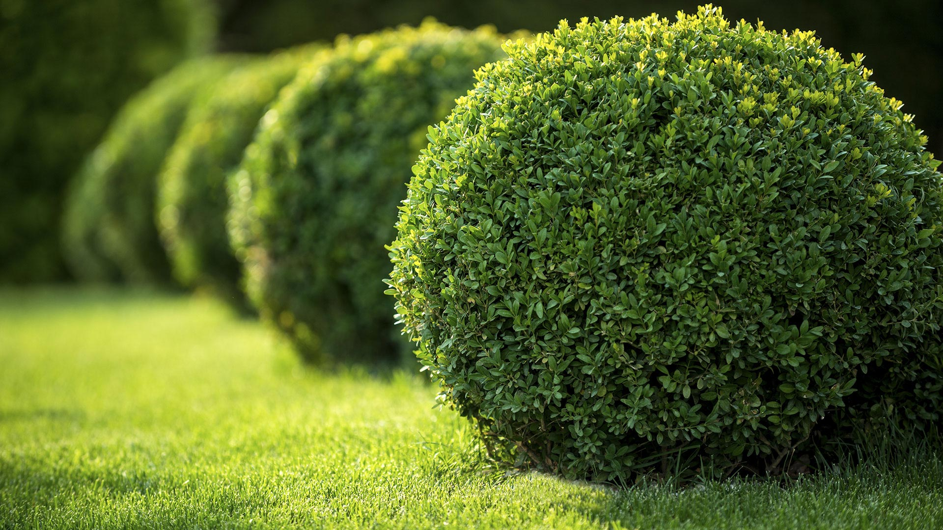 Green Carpet Lawns Lawn Care, Landscaping and Tree Removal slide 1